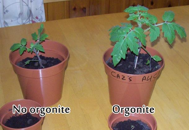 Orgones Gardenite Lemurian Plant Growth Assistance